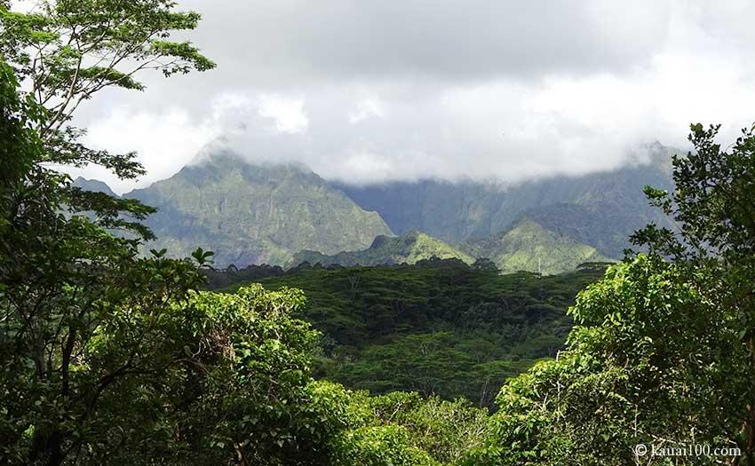 カウアイ島ワイアレアレ山の山頂付近