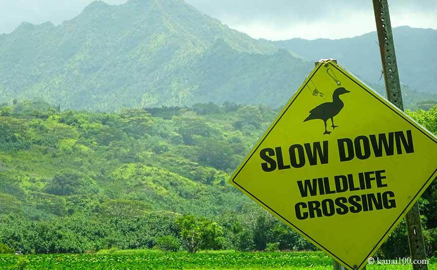 カウアイ島 ハナレイ野生生物保護区