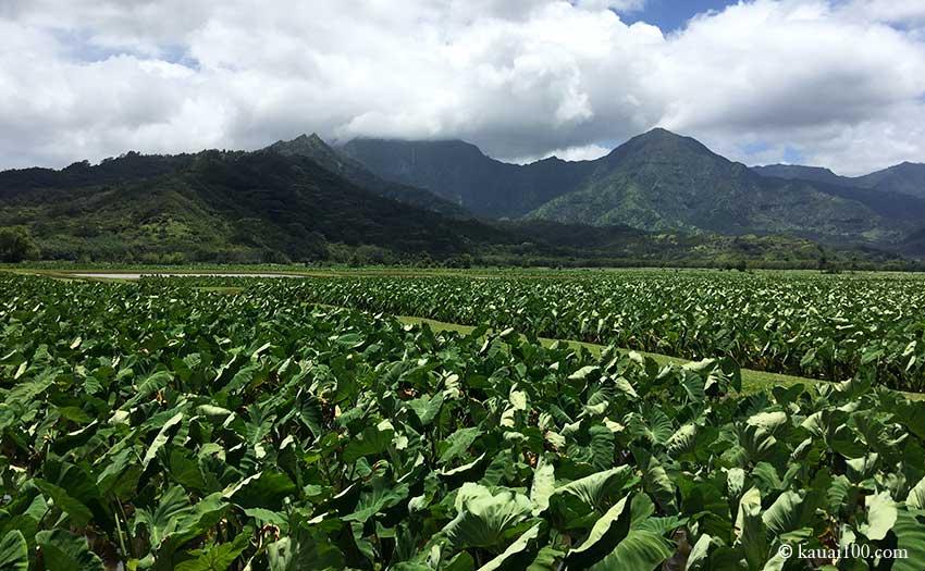 カウアイ島 ハナレイ・ナショナル・ワイルドライフ・レフュージ