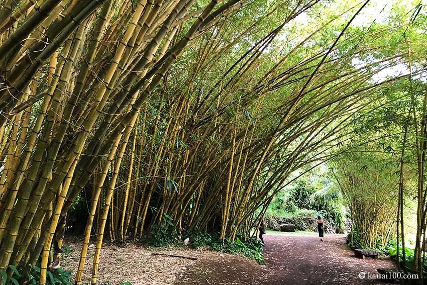 竹を用いたガーデニング