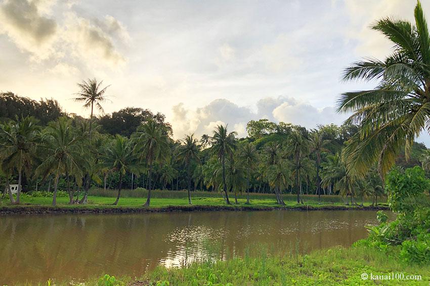 ラワイ川河口
