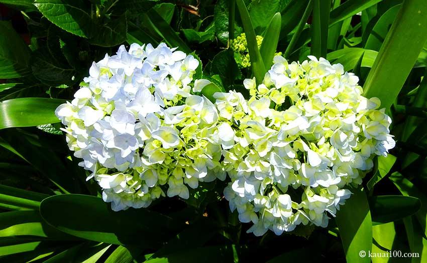 公園に咲く植物